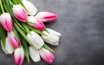 tulips,beautiful,цветы,spring,White