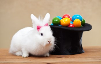 цилиндр,яйца,colorful,кролик,Rabbit,крашенные,Easter,eggs,Holidays,spring