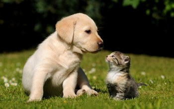 cute,puppy,kitten