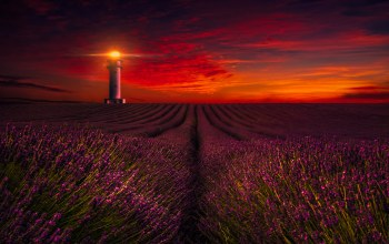 field,lavender,Sunset,lighthouse