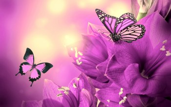 Butterfly,Purple,animated