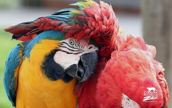 friends,macaws