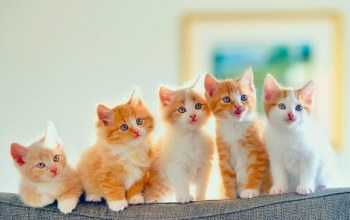 cute,kittens,orange