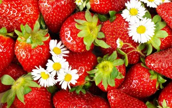 cute,flower,strawberries
