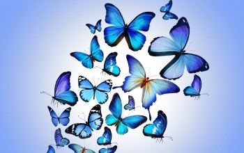 blue,animated,Butterfly
