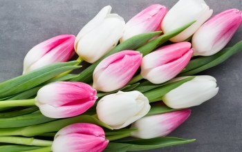 beautiful,tulips,spring,White,цветы