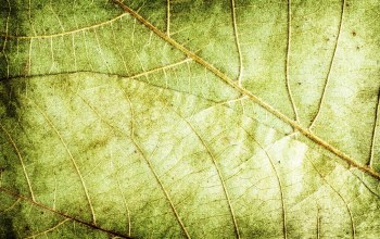 closeup,leaf