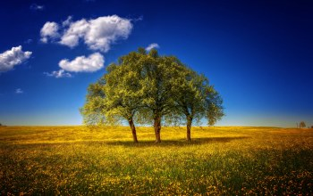 three,trees,grass,field