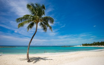 coconut,beach,tropical,tree,island