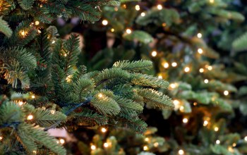 xmas,decoration,рождество,fir tree,merry christmas