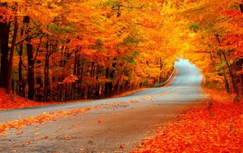 fall,falling,Road,leaves