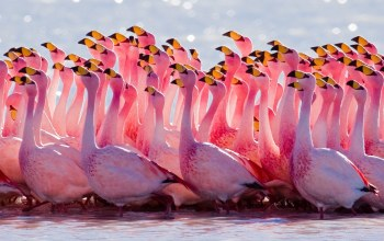 Birds,flamingos,cute