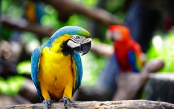 parrot,macaw