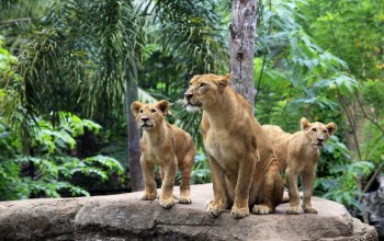 female,cubs