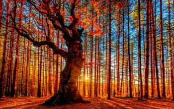 trees,forest,Red,beautiful