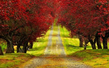 trees,Road,Red,autumn