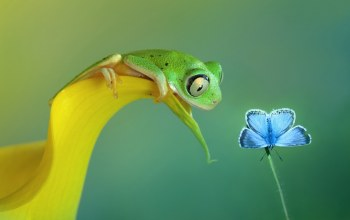 blue,Frog,Butterfly,tiny