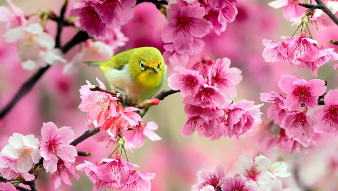 blossoms,tiny,and,spring