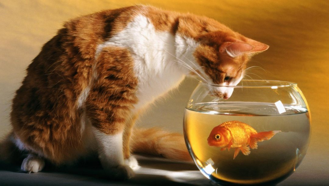 cat,fish,and