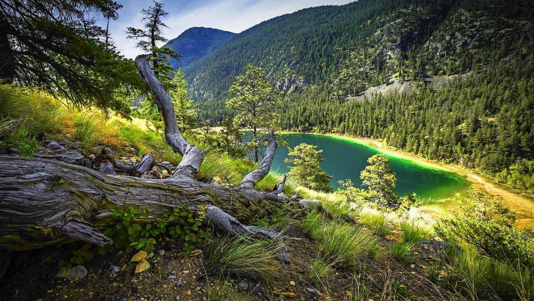 trees,mountain,turquoise lake,dry grass,forest