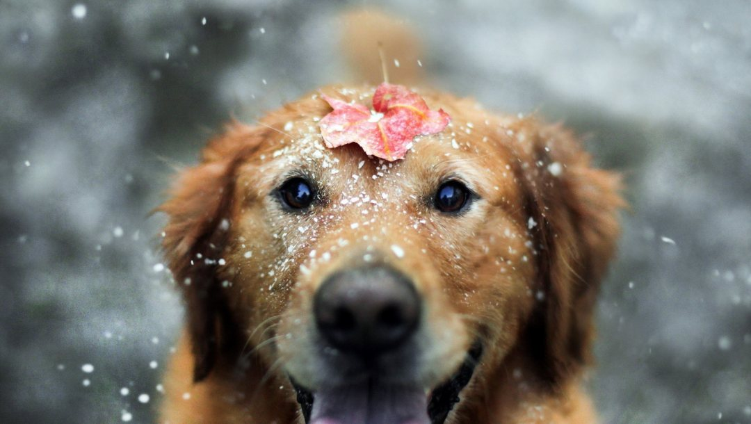 in,snow,the,happy