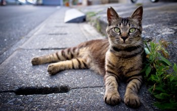 cat,sitting,roadside,at