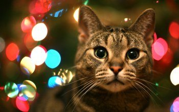 lights,bokeh,cat,christmas
