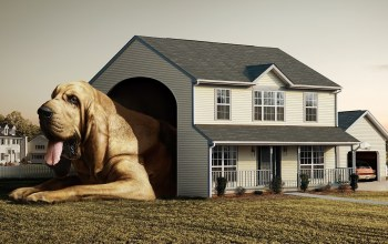 house,Bloodhound