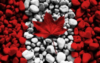 flag,canada,rocks,leaves