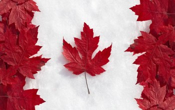 leaf,maple,flag,canada