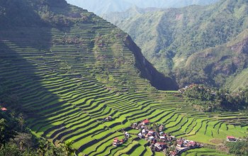 rice,terrace,batad