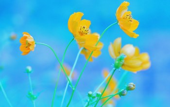 background,yellow,blue