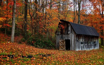 autumn,forest,barn,old