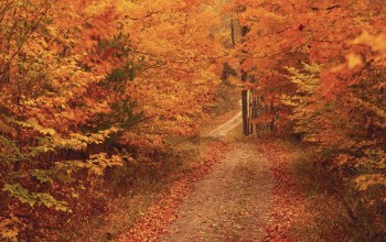 forest,autumn
