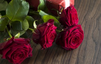 красные розы,Valentine`s day,roses,Red,gift
