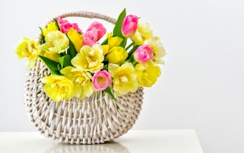 Bouquet,tulips,basket,корзина