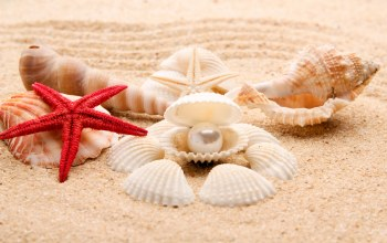 sand,Seashells,shore,starfish,summer,paradise,blue,beach,ракушки