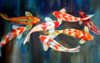 koi,fish,painting