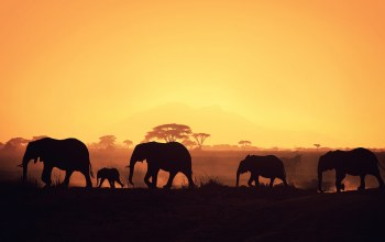 sunrise,elephants,africa