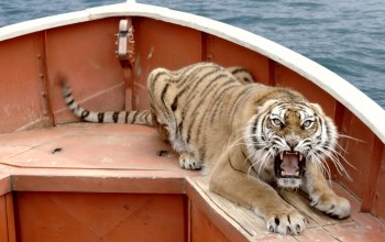 boat,angry,Tiger,a