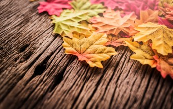 autumn,осень,maple,leaves,wood,background,осенние