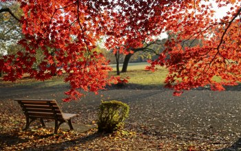 осень,colors,leaves,листва,autumn,park,fall