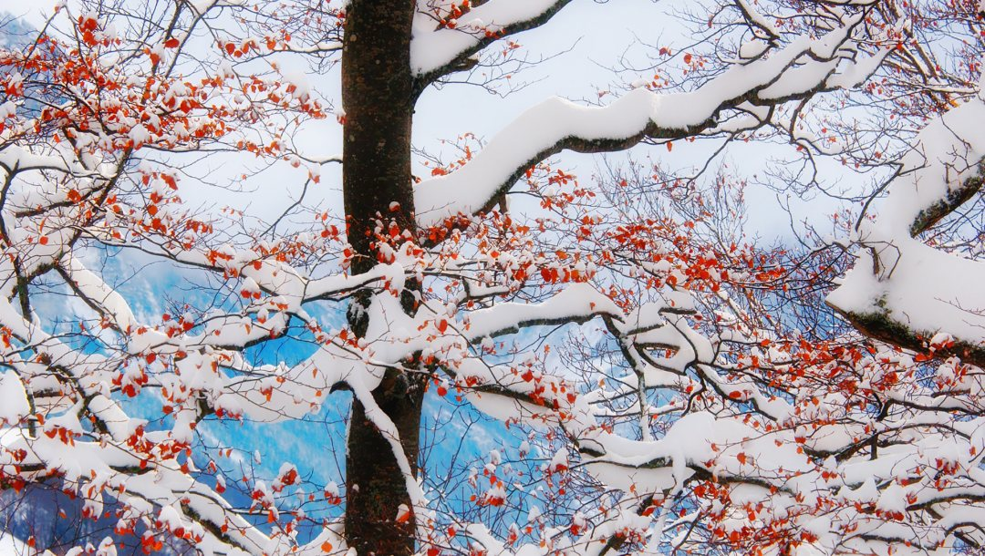 winter,clouds,leaves,tree,branches,mountains,snow,freeze,frost