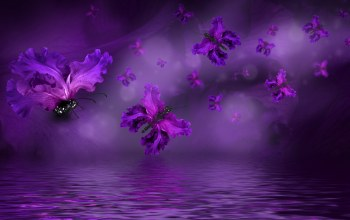 water,Purple,butterflies,Floral