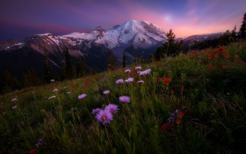 rainier,sky,wildflowers,landscape,mount