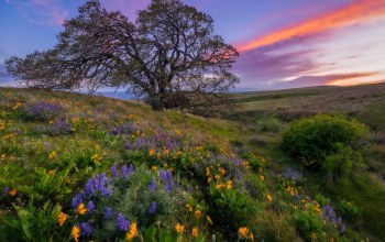 Columbia hills state park,washington state,цветы,луг