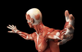 muscle fiber,human,body,muscles