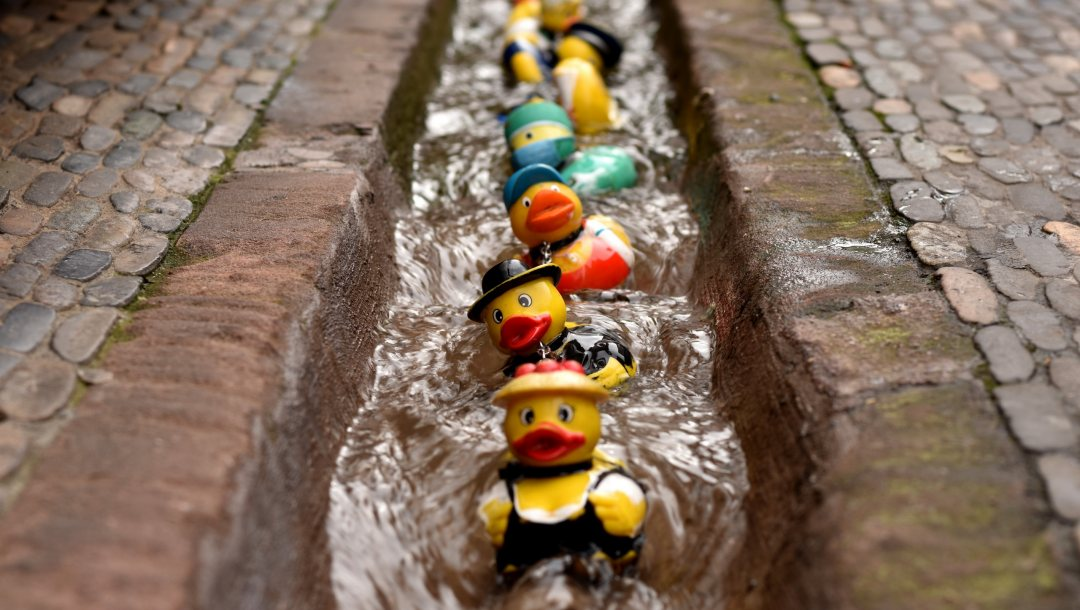 rubber duck race,bunt,Colours