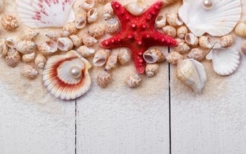 still life,ракушки,wood,Marine,жемчужина,perl,starfish,sand,Seashells
