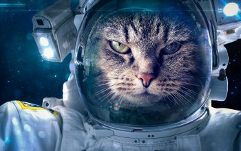 fantasy,Space suit,cat